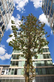 Free Tree And Office Blocks Stock Photos - 5654573