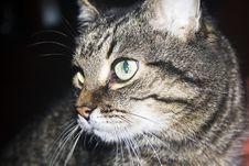 Free Cat Stock Photos - 5655493