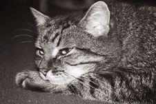 Free Cat 2 Royalty Free Stock Photos - 5655518