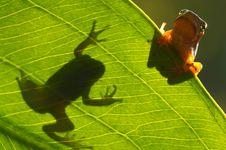 Free Tree Frog Company Stock Photos - 5655613