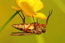 Free Beautiful Fly Stock Photo - 5655640