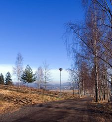 Free Birches Along The Road Royalty Free Stock Photo - 5656125