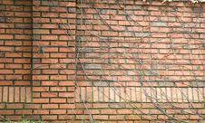 Vine Covered Brick Royalty Free Stock Photo