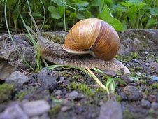 Free Snail Grape Stock Photo - 5656540