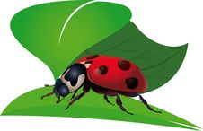 Free Ladybird. Bug. Royalty Free Stock Image - 5657166