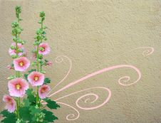 Floral Background With Mallow Royalty Free Stock Photography
