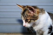 Free Little Female Cat 3 Stock Photo - 5658130