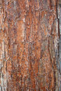 Free Abstract Wood Crust Texture Stock Photography - 5661532