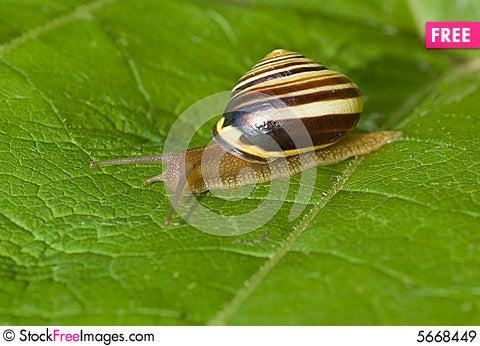 Free Snail Macro Royalty Free Stock Images - 5668449