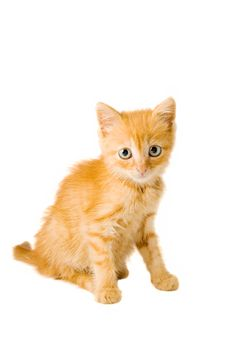 Free Red Kitten Royalty Free Stock Images - 5660209