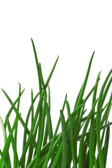 Free Green Grass Royalty Free Stock Photo - 5660365