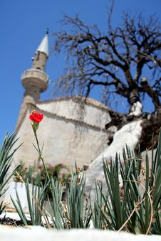 Mosque, Old Tree And Flower Stock Photography