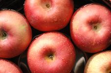 Free Red Apples Royalty Free Stock Images - 5661089