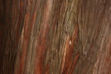 Abstract Wood Crust Texture Royalty Free Stock Photography
