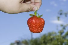 Red Freshness Strawberry Stock Image