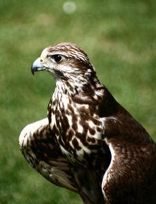 Free Bird04 Royalty Free Stock Image - 5662856