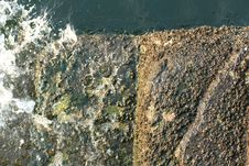 Free Barnacles Attached To Pier Rocks Stock Photo - 5663000