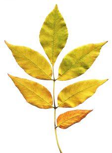 Free Autumn Leaf Royalty Free Stock Photos - 5664268