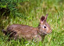 Free Bunny Taking Sunshine Stock Photo - 5666410