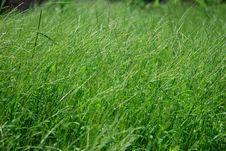 Free Lush Wild Grass Stock Images - 5668234