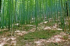 Free Bamboo Forest Stock Images - 5668244