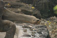Free Galapagos Tortoise Stock Image - 5668261