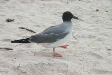 Bird On Beach Royalty Free Stock Photography