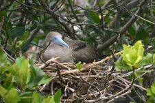 Bird In A Nest Royalty Free Stock Photos