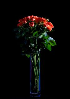 Free Beautiful Wet Roses In A Blue Vase Stock Images - 5669224