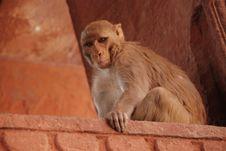 Free Monkey Royalty Free Stock Images - 5669279