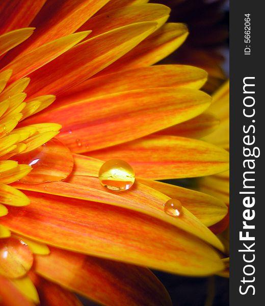 Petals and Raindrop