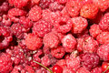 Free Just The Collected Berries Of A Raspberry, A Curra Royalty Free Stock Image - 5673306