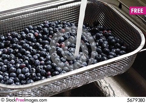 Free Blueberries Stock Photo - 5679380