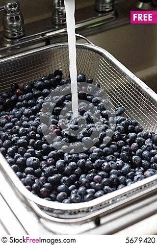 Free Blueberries Stock Photo - 5679420
