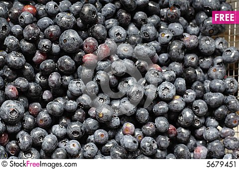 Free Blueberries Stock Image - 5679451