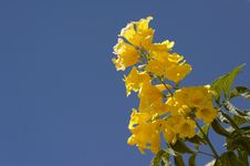 Free Yellow Flower On A Background Of The Sky Royalty Free Stock Image - 5670416
