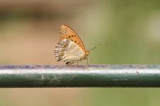 Free Butterfly Stock Photography - 5670592