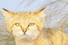 Free Wild Cat Royalty Free Stock Photo - 5671075