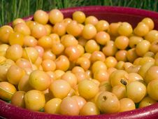 Free Bucket Of Cherries Stock Images - 5671834