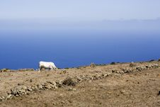 Free Cow Grazing, Highlands La Dehesa, El Hierro Stock Photography - 5672042