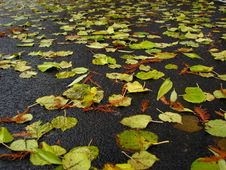 Free Wet Leaves Fallen On Ground Stock Photos - 5673733