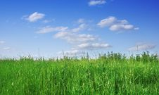 Free Green Grass And Blue Sky Stock Photography - 5673802