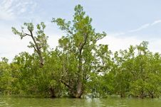Mangrove Tree Flooding Stock Images