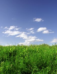 Free Green Grass And Blue Sky Stock Photography - 5674152