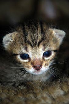 Free Kitten Stock Photo - 5674180