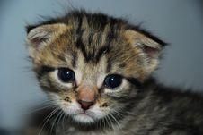 Free Kitten Stock Photo - 5674200