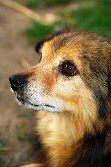 Free Dog Royalty Free Stock Image - 5674436