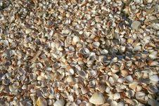 Free Shells Stock Image - 5675221