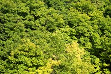 Forest, Bright Green Leaves Royalty Free Stock Photos
