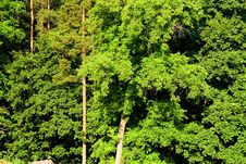 Free Forest, Bright Green Leaves Royalty Free Stock Images - 5675259